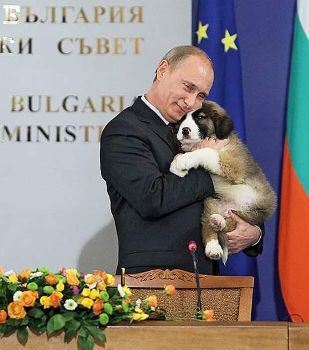 В 2010 году премьер-министр Путин получил в подарок от болгарского коллеги Бойко Борисова щенка болгарской каракачанской овчарки Баффи