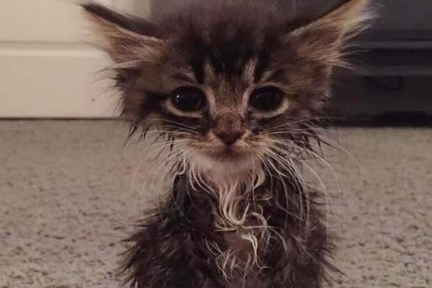 Маленький котёнок со странной внешностью смог найти себе хозяйку и тёплый дом