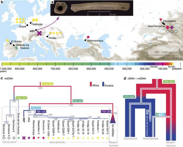 Почему у предков неандертальцев денисовская ДНК?