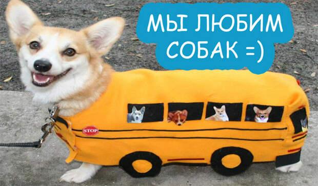 Милые и смешные животные (много милых собак)