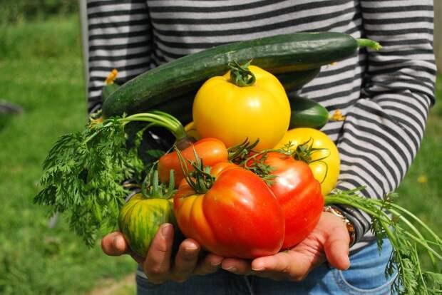 Овощи подорожали в России