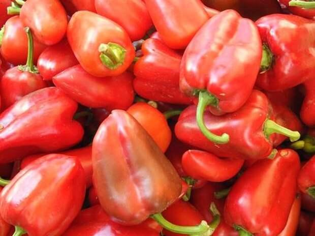 Удачные дни для пересадки перцев в теплицу и открытый грунт в мае и июне 2021 по лунному календарю. Как подготовить рассаду