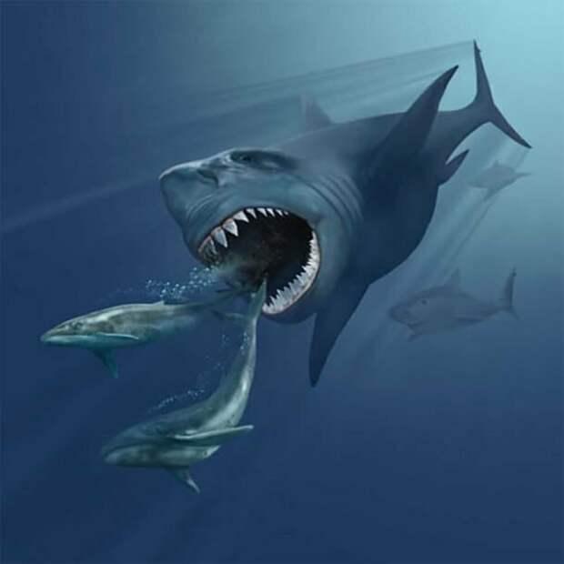 Говорят, что… акулы, факты, хищники