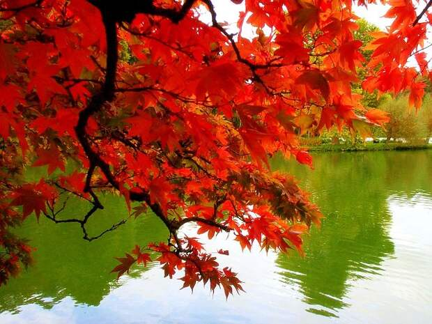 http://nowaday.biz/wp-content/uploads/free-pictures-fall-autumn-colors-leaves-Mexicanwave-pic.jpg