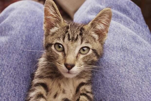 8. Кошку легче держать у себя на коленях. жены, интересное, кошки, юмор
