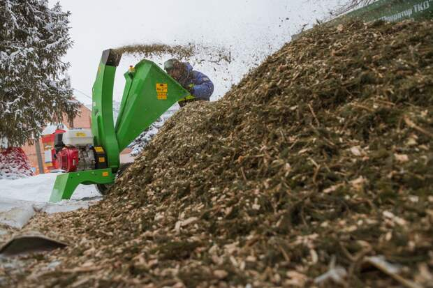 Жители Ижевска сдали на переработку 360 хвойных деревьев