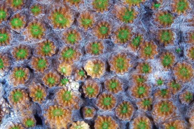Corals13 Макрофотографии кораллов