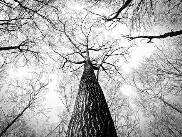 Аварийные деревья на Малахитовой не обнаружили — управа
