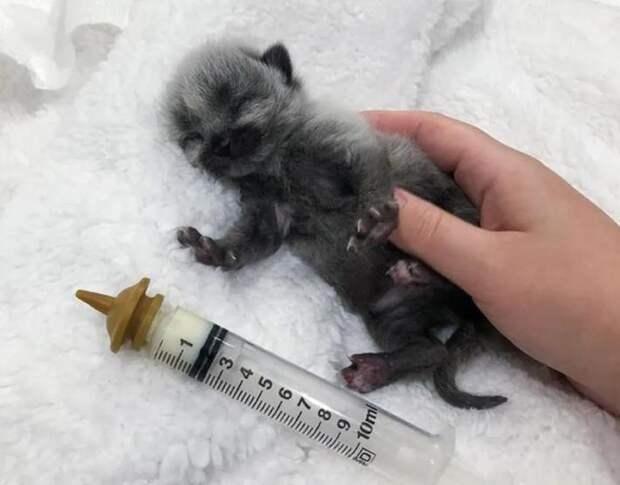 Котенок с необычным окрасом начал с приключений с первых дней жизни