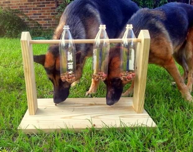 Увлекательная игрушка для собаки: такую в магазине точно не купишь
