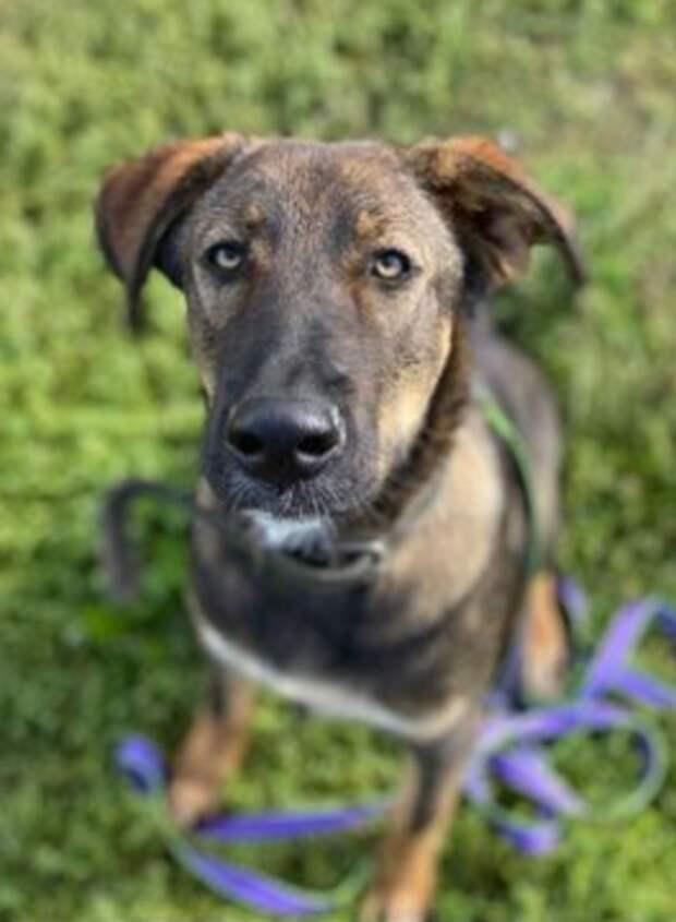 В районе Машкинского шоссе потерялся пес