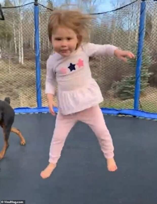 Вопрос, кто больше доволен: девочка и её собака прыгают на батуте