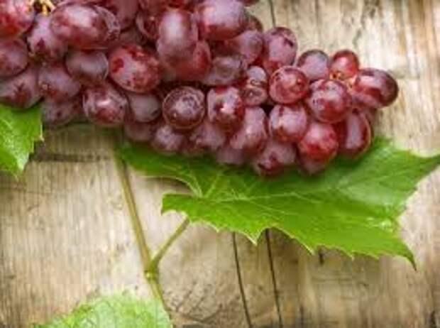 Вредны ли гипертоникам пурины, содержащиеся в красном вине?