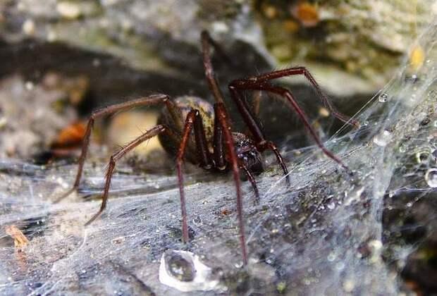Гигантские пауки-людоеды из легенд Кабардино-Балкарии существуют и поныне?