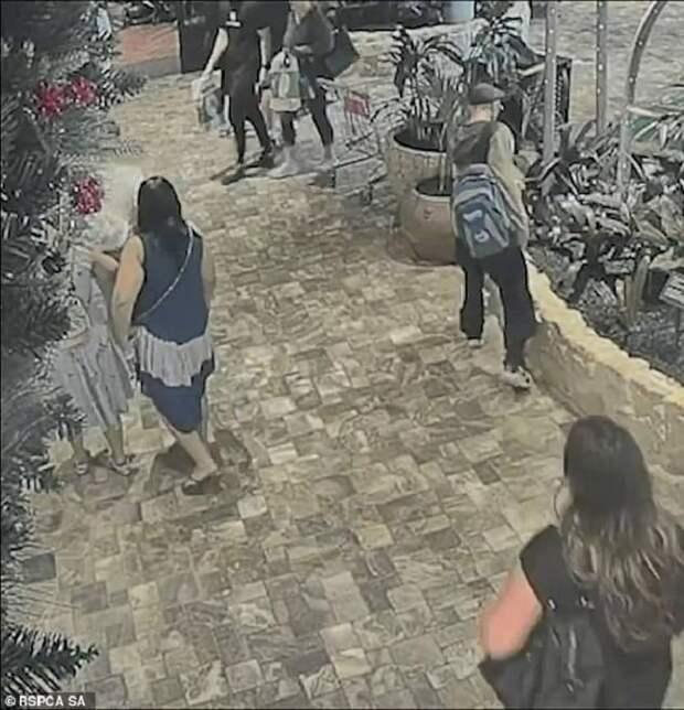 Мужчина и женщина выбросили в торговом центре какой-то предмет. А через миг «предмет» испуганно пополз в кусты