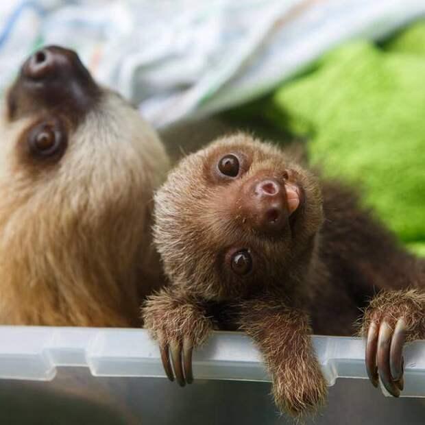14 фото животных, глядя на которые невозможно сдержать умиление