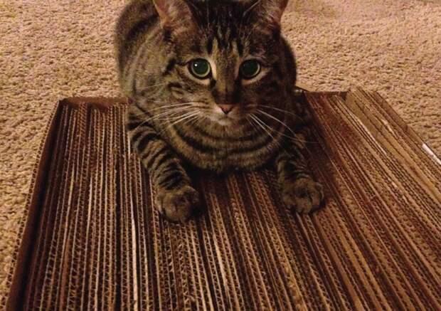 Вариант 1: супер бюджетный когтеточка, конус, коробка, кот