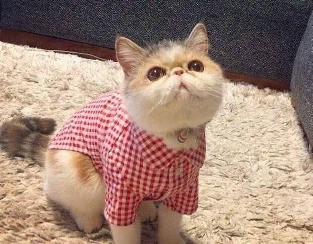Не только смешные шапочки и очки, но и даже рубашки Буона, Стиль, домашние питомцы, животные, кошка, милота