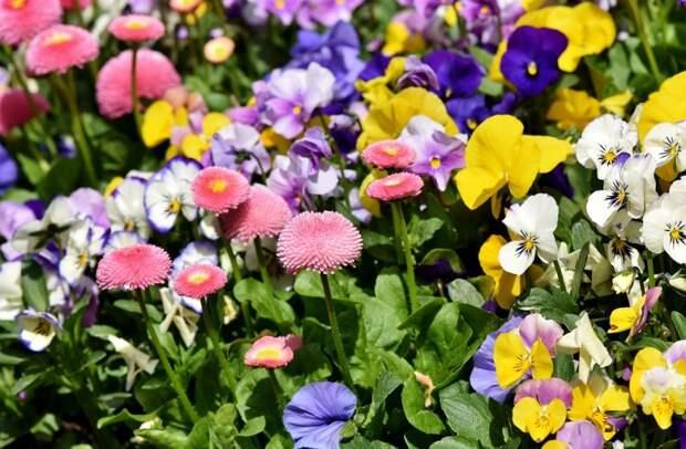 Цветы. Фото: pixabay.com
