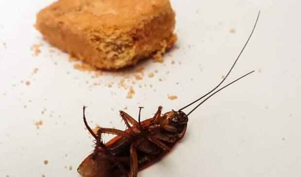 Накипело: оренбурженку вбольнице «достали» тараканы