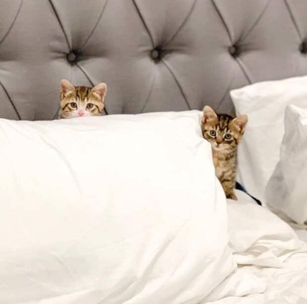 Котята на кровати