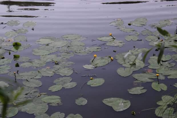 В сквере по Олонецкому проезду проверили состояние цветников и зеленых насаждений