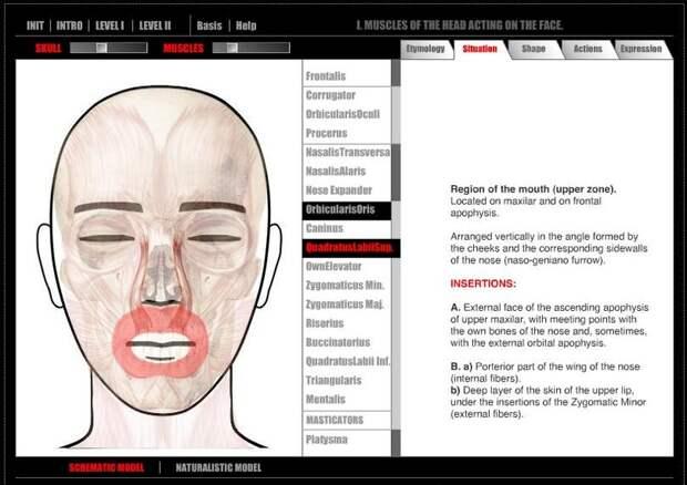 Artanatomy – программа, разработанная художницей Викторией Контрерас Флорес