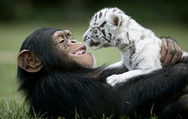 В горе и радости: 10 безумно трогательных примеров дружбы зверей