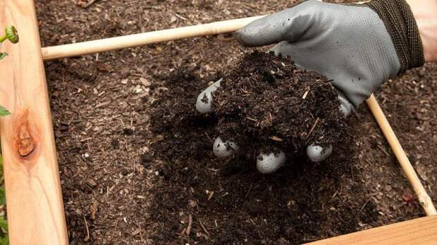 Быстрый компост в мешках осенью закладываем, а весной вносим на грядки
