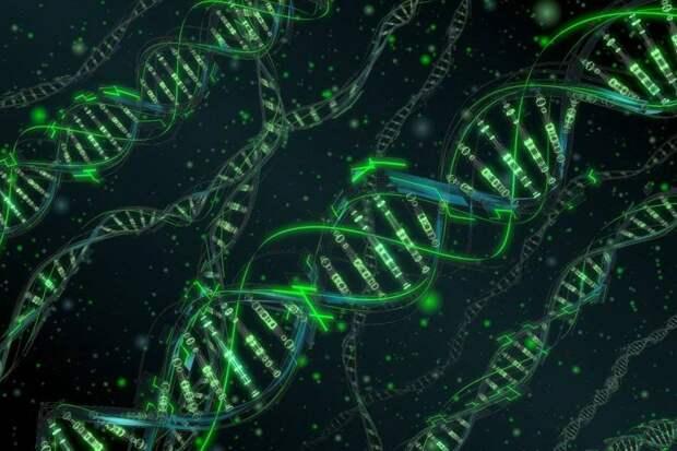 Расшифровка генома человека скоро будет завершена