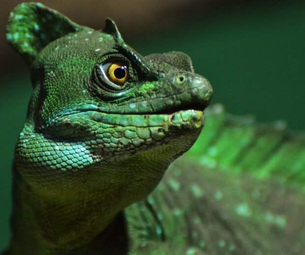 8 прикольных фото василисков. И нет, это не огромная змея из «Гарри Поттера»