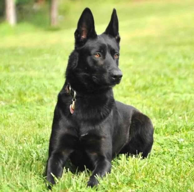 Фрейзеру удалось нажать на кнопку брелка на поясе, чтобы открыть дверь своей машины, где находился его пёс по кличке Лукас. Собака сразу же бросилась спасать хозяина. животные, истории, нападение, собака, собаки, спасение, трогательно, фото