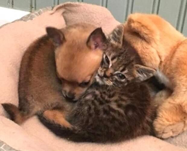 Лучшие друзья: как котенок протянул лапу помощи щенку