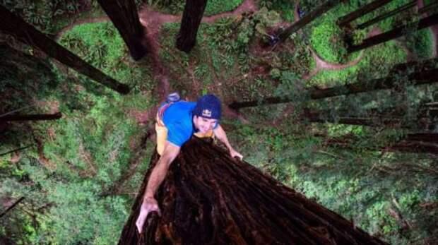 Ни в коем случае не делайте этого, если вы заблудились в лесу