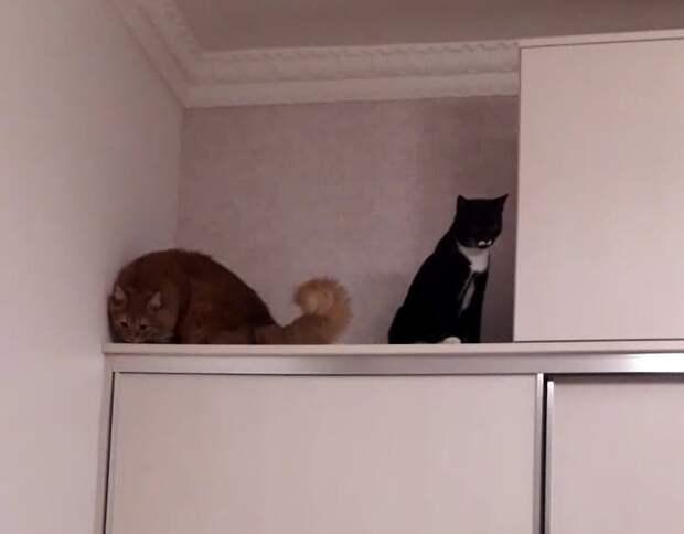 История котика Пуаро, который переезжал 5 раз, пока ненашел свое счастье