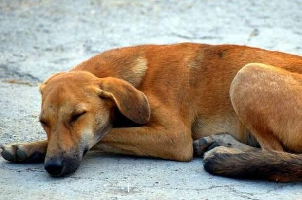 В Краснодаре волонтеров приглашают выгулять собак из приюта