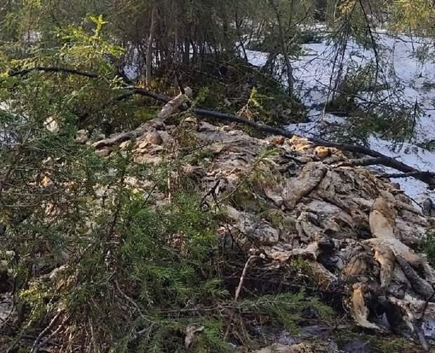 Еще одна свалка мертвой форели обнаружена в Карелии