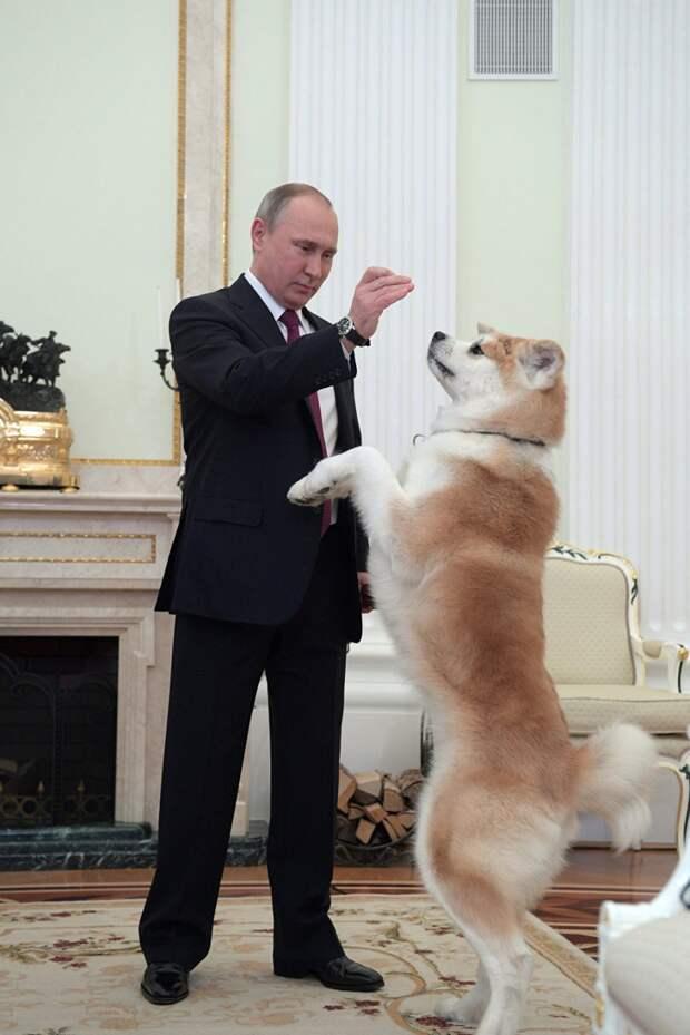 Картинки по запросу Владимир Владимирович Путин