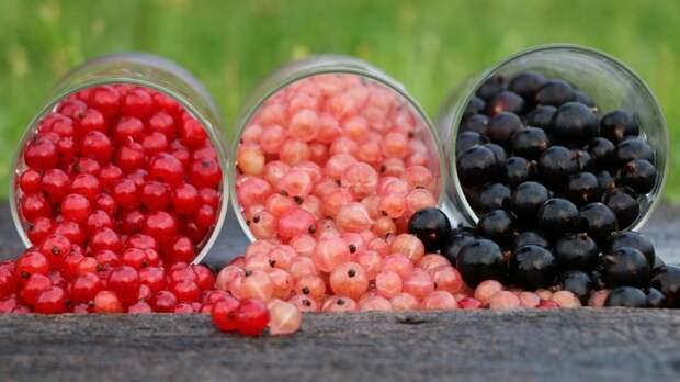 Минприроды РФ отреагировало на сообщения об ужесточении правил сбора грибов и ягод
