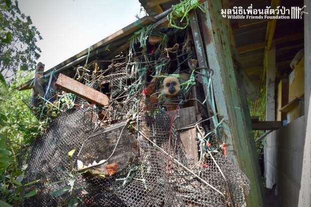Золотистый ребёнок жил в мешке мусора 10 лет! Его владельцы вызвали спасателей от отчаяния…