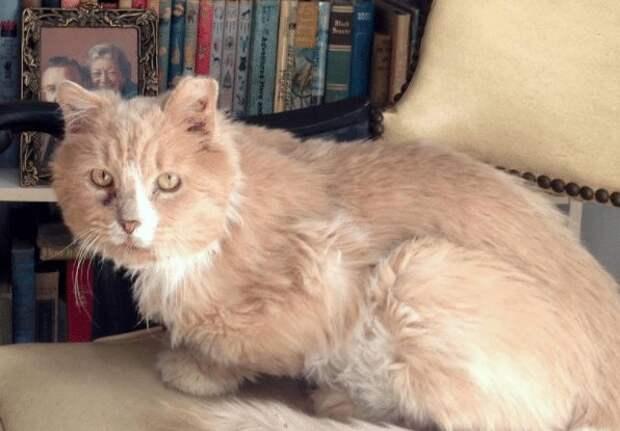 Бродячего кота нашли в ловушке, но благодаря людям он снова стал домашним