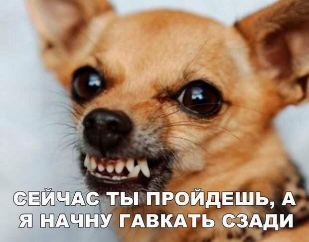 Смешные картинки с надписью со смыслом (12 фото)