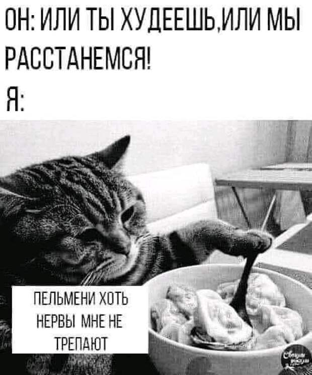 Возможно, это изображение (кот и текст «OH: или ты худеешь,или мы расстанемся! я: пельмени хоть нервы мне HE трепают CбeBAM PUKJR»)