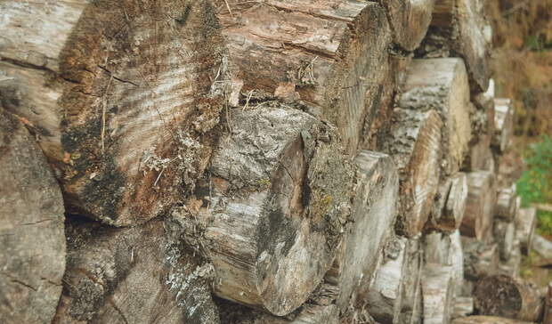 Вывозом леса в Китай займется госкомпания-монополист
