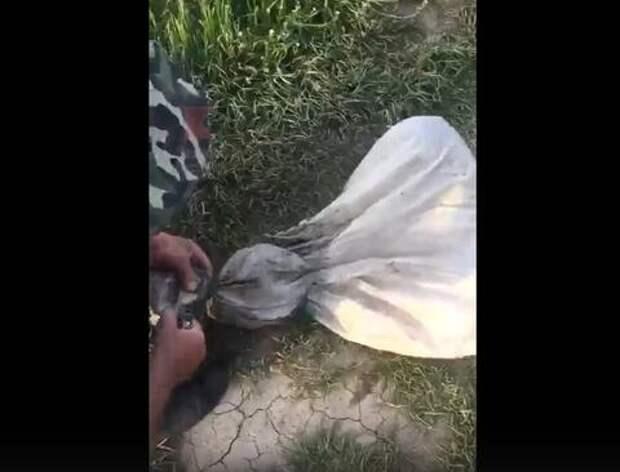 В Краснодарском крае неизвестные пытались утопить собаку в мешке с камнями