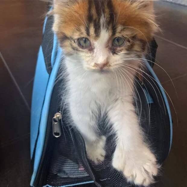 Потрепанный котенок со слипшимися глазами превратился в красавца