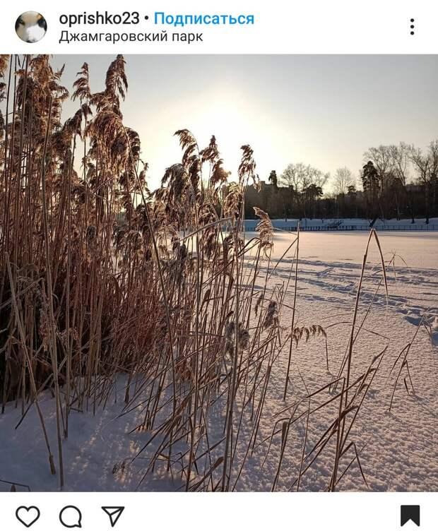 Фото дня: в Джамгаровском парке порозовел снег