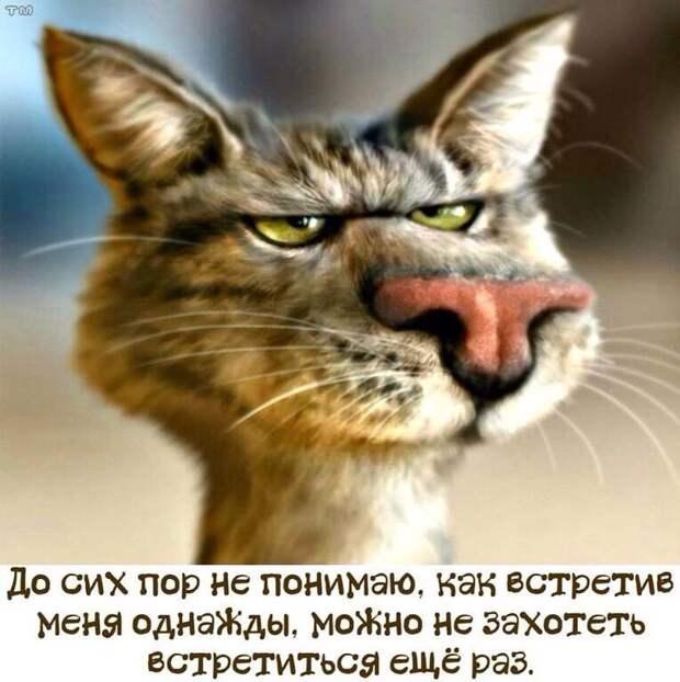 Большинство мужчин похожи на псов. На вид грозные, любят рычать...