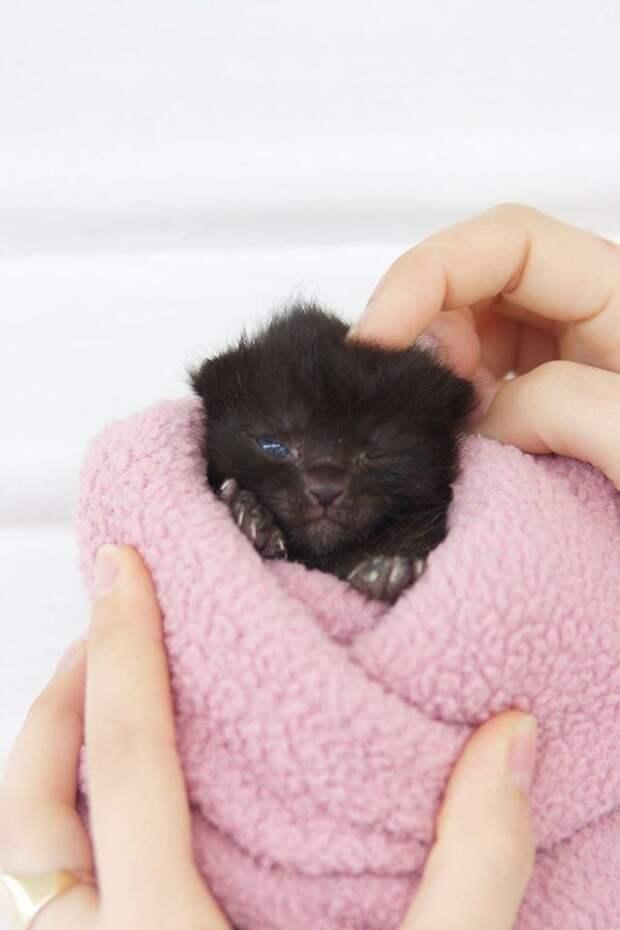 Раньше она не любила котов, а теперь каждый день спасает нового и нового котёнка!!!