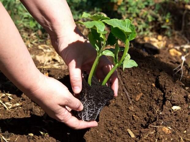 Как вырастить самую большую тыкву – полезные советы